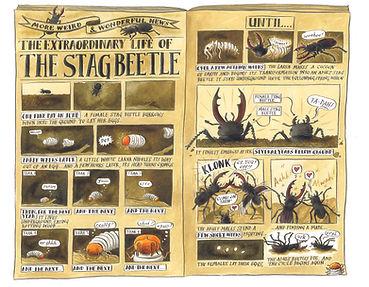 The Stag Beetlelow.jpg