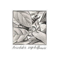 Anisolabis