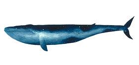 The Sky Whale I