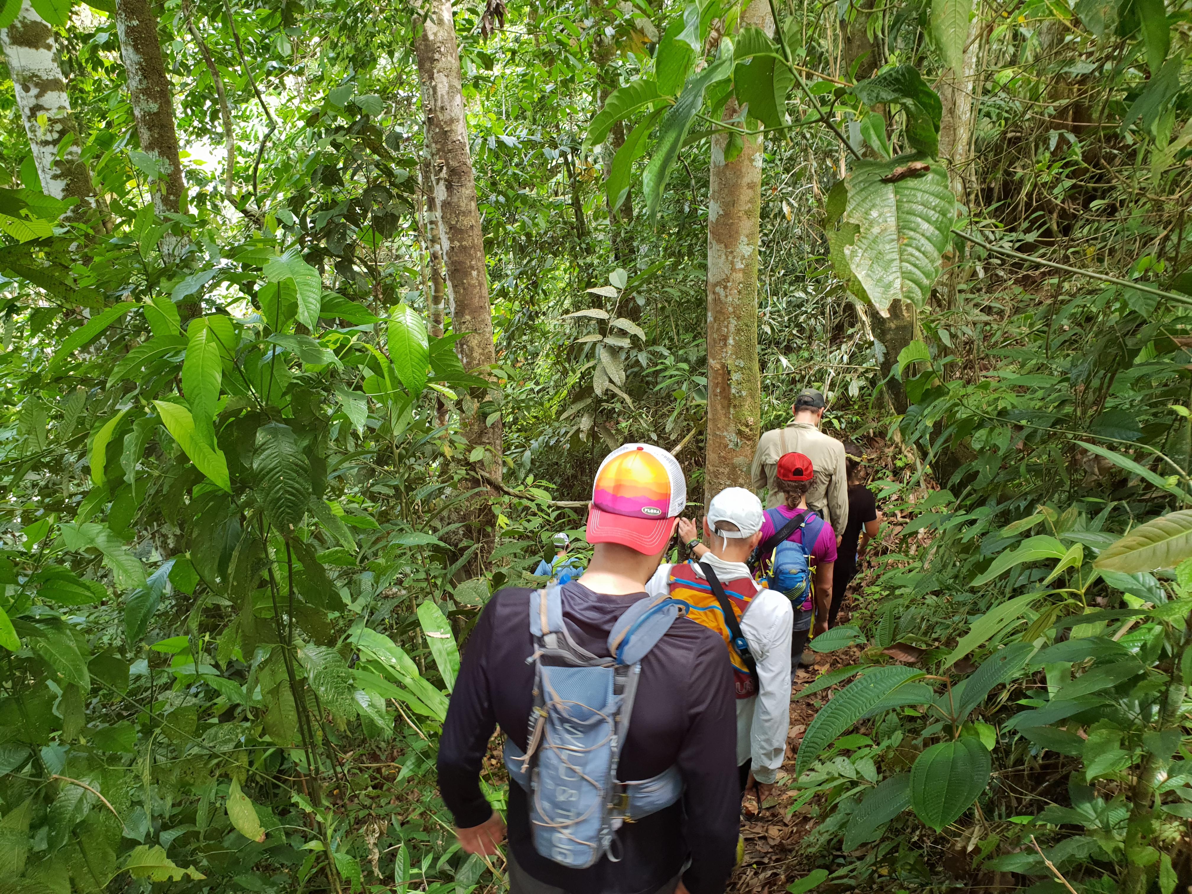 Jungle, Ecuador, Trail Running