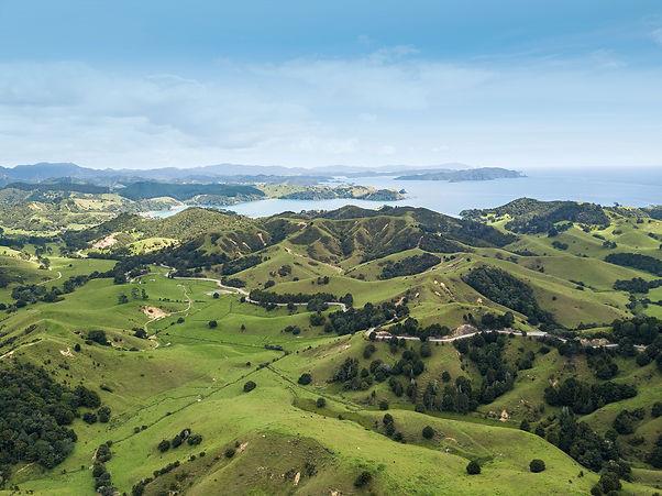 Pure-New-Zealand-Manuka-Honey.jpg