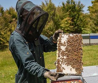 New-Zealand-Manuka-Beekeeping.jpg