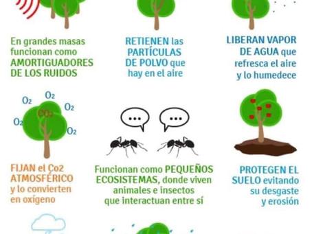 Razones para plantar un árbol ...
