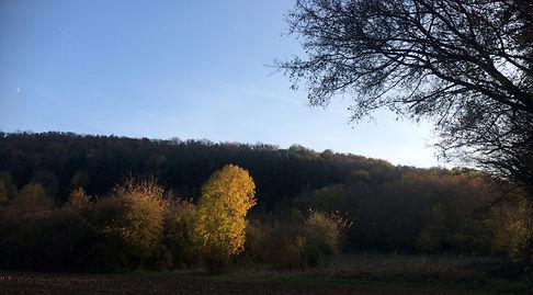 automne 18.jpg