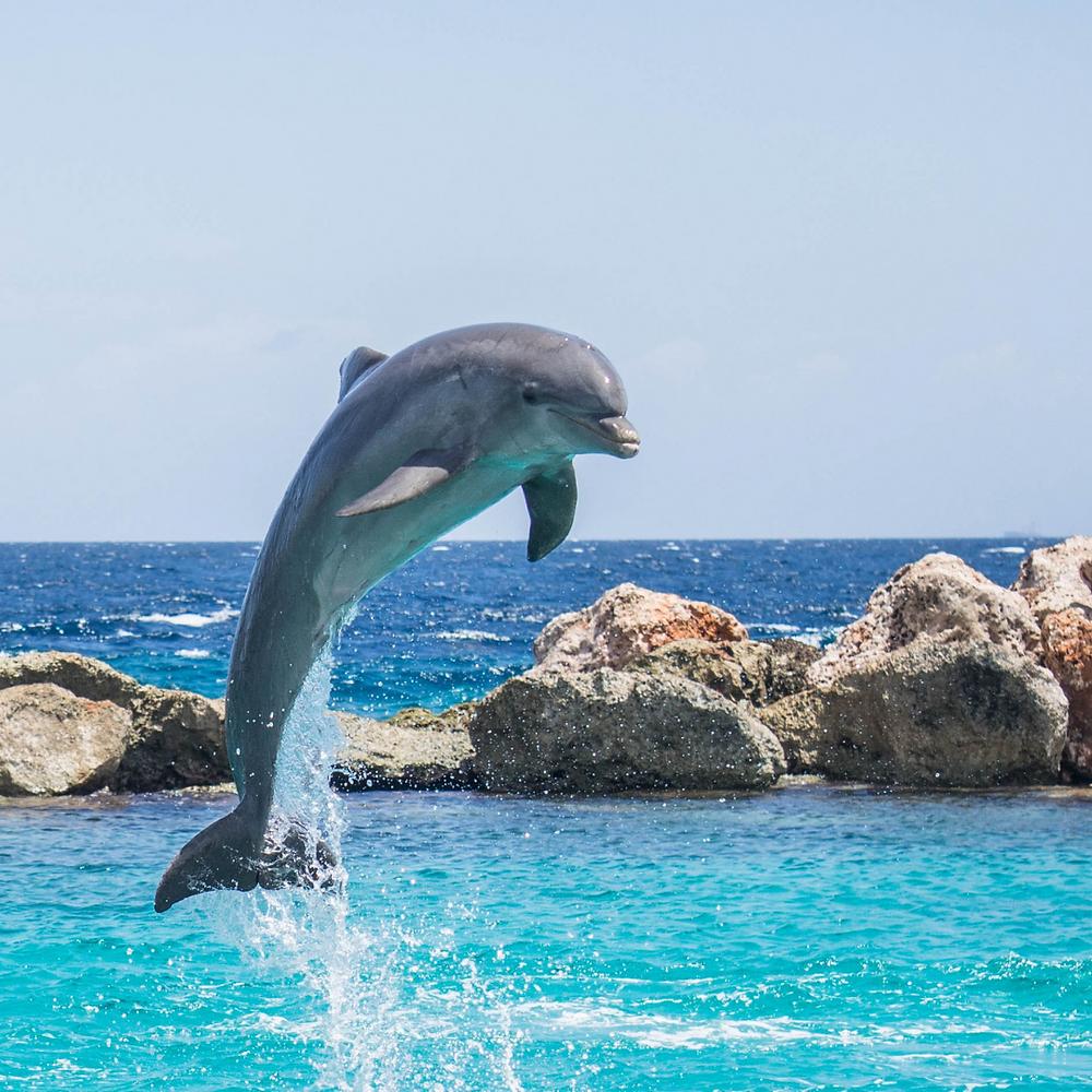 Krafttier Delfin