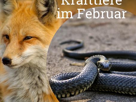 Krafttiere im Februar