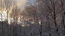 My First Winter in the Northwest Hills