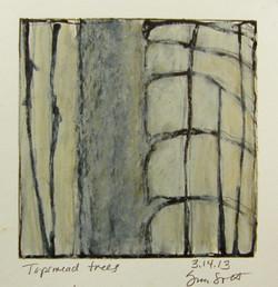 3.14.13 Topsmead trees.JPG
