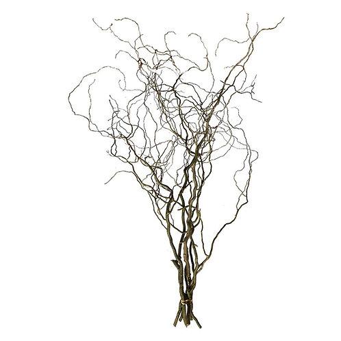 Korkenzieherweide natur  Bund ca. 40 cm