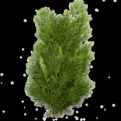 Deko Koniferen Grün 0.8 kg Bund