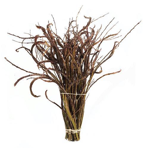 Bandweide (Salix udensis) natur ca. 40 cm