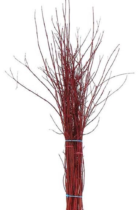 Hartriegel rot Bund ca. 40 cm