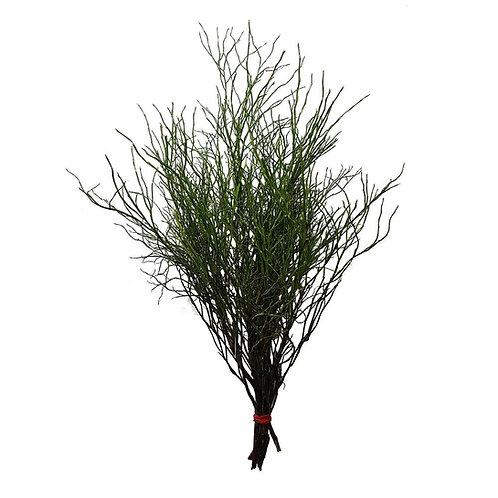 Heidelbeerzweige grün Bund ca. 40 cm