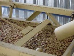 Lavagem dos grãos