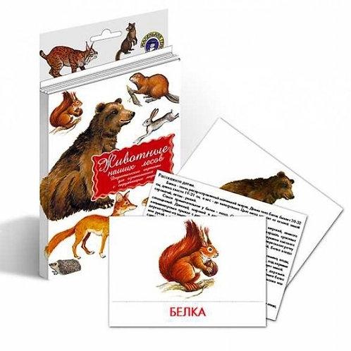Дидактические карточки Животные наших лесов Маленький гений
