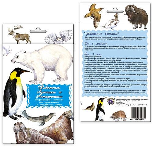 Дидактические карточки Животные Арктики и Антарктики Маленький гений