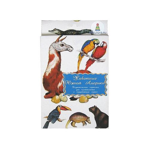 Дидактические карточки Животные Южной Америки Маленький гений