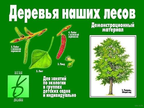 Демонстрационный материал Деревья наших лесов Бурдина