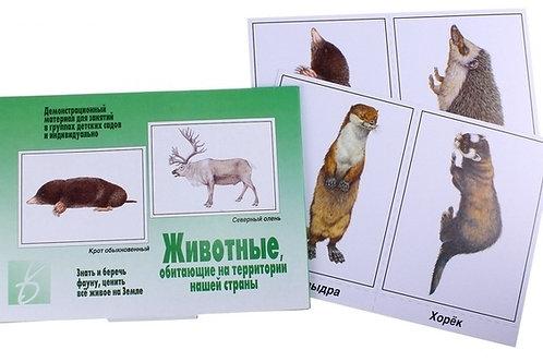Демонстрационный материал Животные, обитающие на территории нашей страны