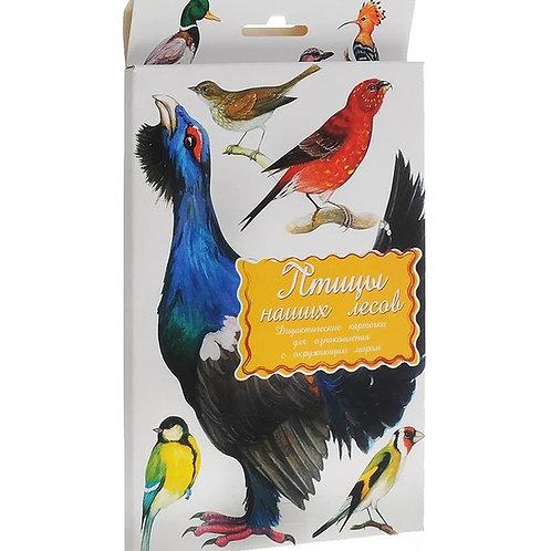 Дидактические карточки Птицы наших лесов Маленький гений