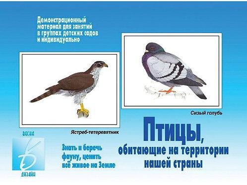 Демонстрационный материал Птицы, обитающие на территории нашей страны Бурдина