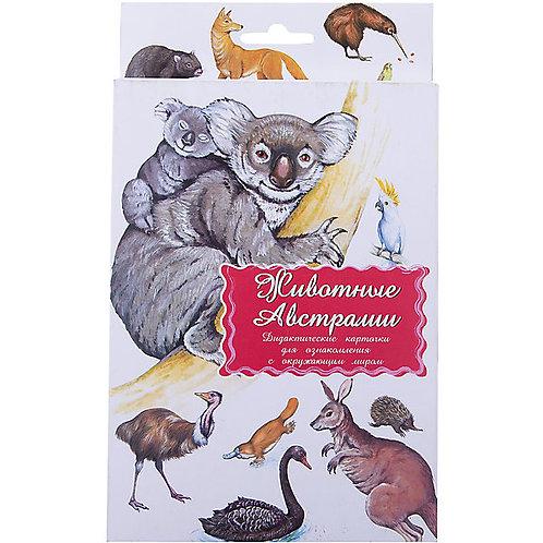 Дидактические карточки Животные Австралии Маленький гений