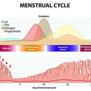 Menstrual Conditions - Mai Acupuncture Clinic
