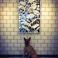 Hund im Bild