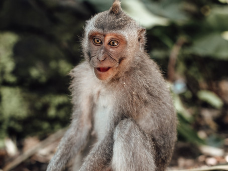 Ubud Monkey Forest Sanctuary - Bali