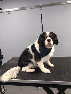 Dog Grooming in Rochdale