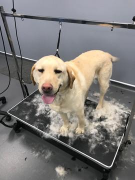 Dog Grooming Deshedding