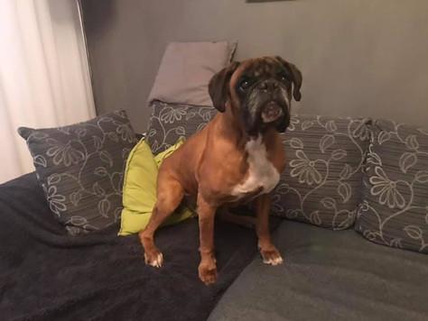 Herzenshund RAUL