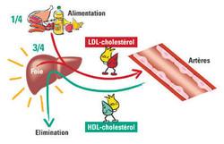 Cholestérol