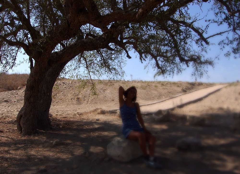 The ghost tree in Lachish (Albert Tour Guide Israel)