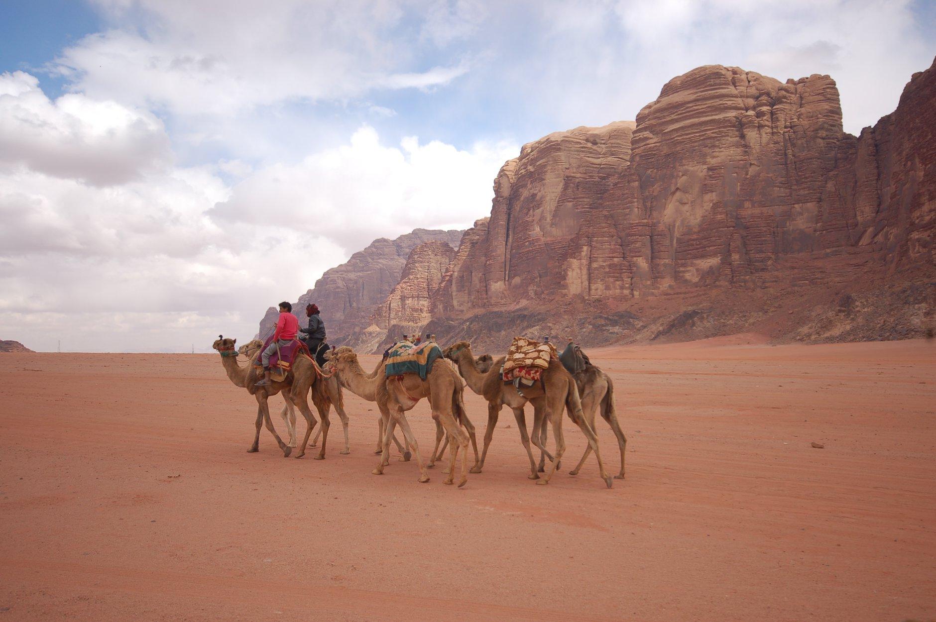 albert-tours-israel-wadi-rum-camels
