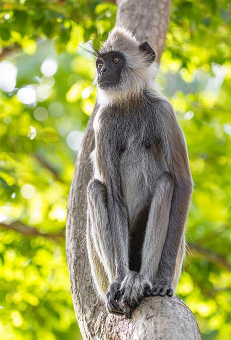 Morning Monkey