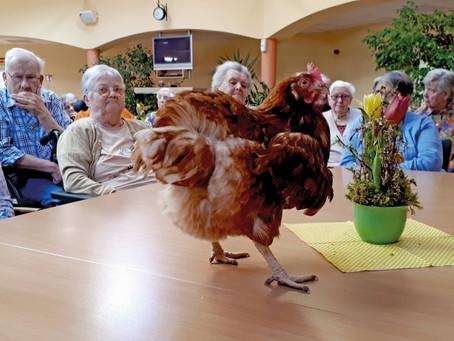 Hühner und Streicheleinheiten