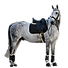 0022437_cavallo_450_edited.png