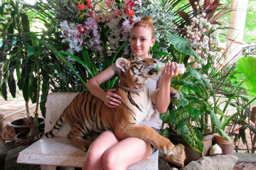 tiger_zoo_aquarium_samui_03_medium