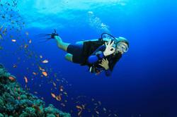 scuba-diving-samui-ko-tao-01_medium