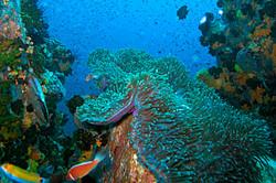 scuba-diving-samui-ko-tao-04_medium