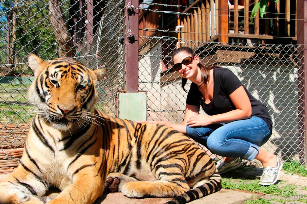 tiger_zoo_aquarium_samui_02_medium