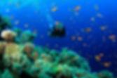 scuba-diving-samui-ko-tao-03_medium.jpg