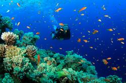 scuba-diving-samui-ko-tao-03_medium