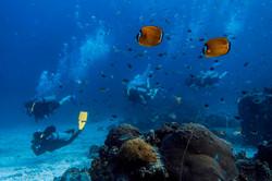 scuba-diving-samui-ko-tao-02_medium