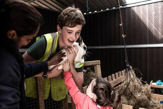 Dublin City Farm