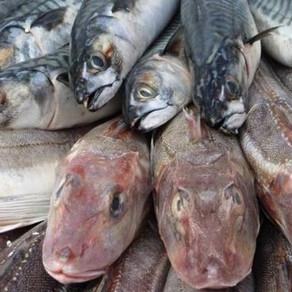 We Need a Circular Fishing Economy