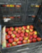 Verpakken hardfruit appes en peren fust