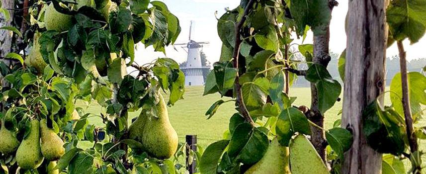 Conference perenboomgaard Deil Enspijk