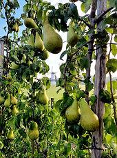 conference peren betuwe perenboom